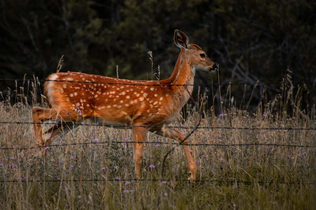 stock photos free  of deer brown deer on grass at daytime mammal