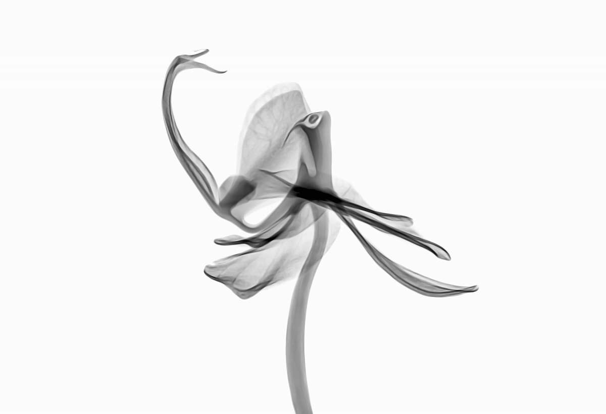 stock photos free  of flower gray abstract painting new jersey institute of technology