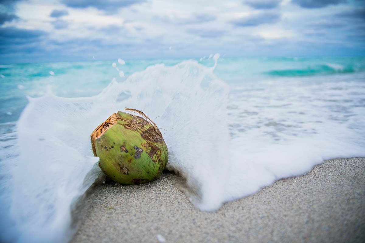 stock photos free  of food coconut on beach with waves nut