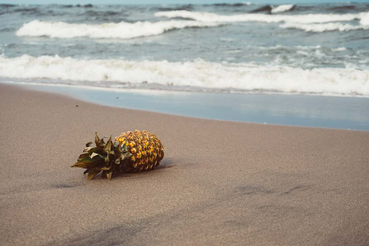 stock photos free  of pineapple pineapple of sands food