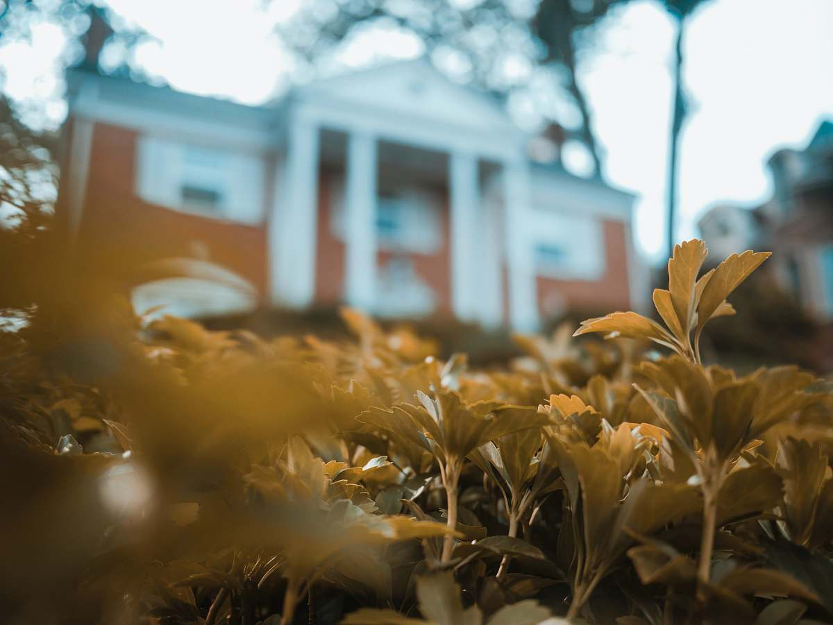 stock photos free  of grass shallow focus photography of green leaves building