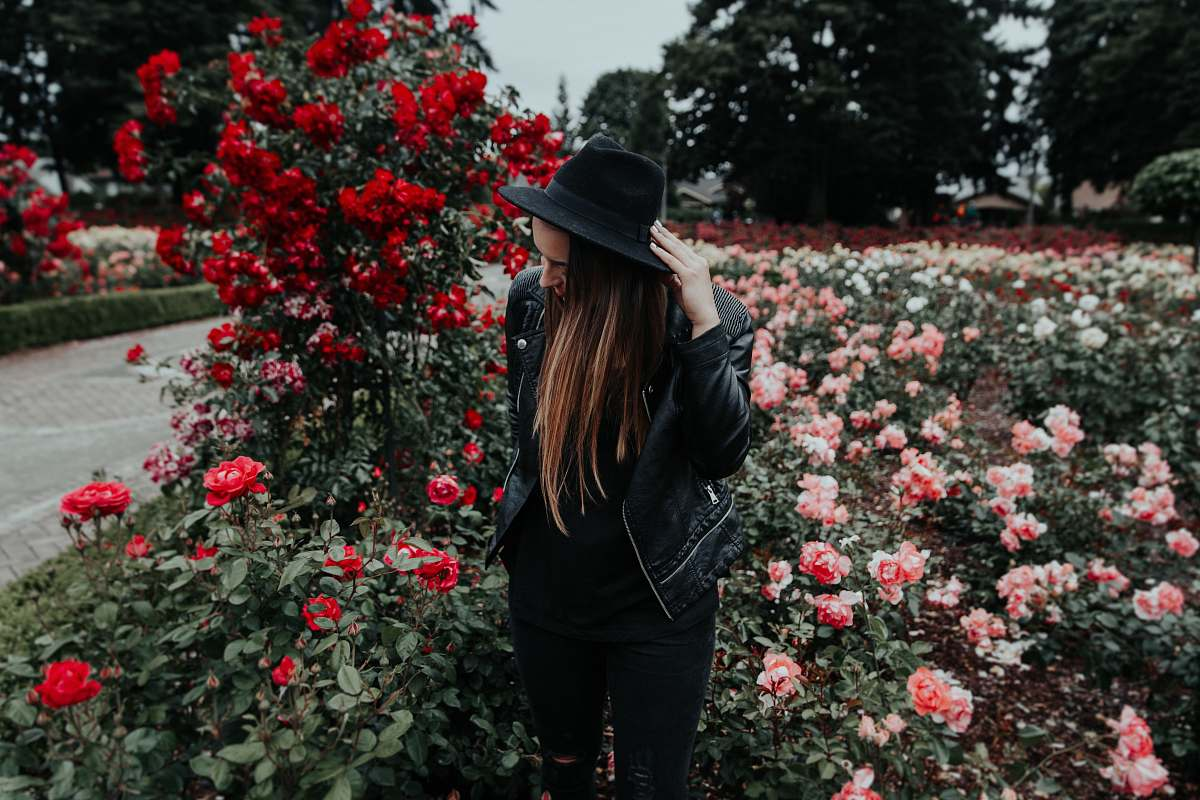 stock photos free  of flower woman in black suit jacket and hat near field of pink and red roses plant
