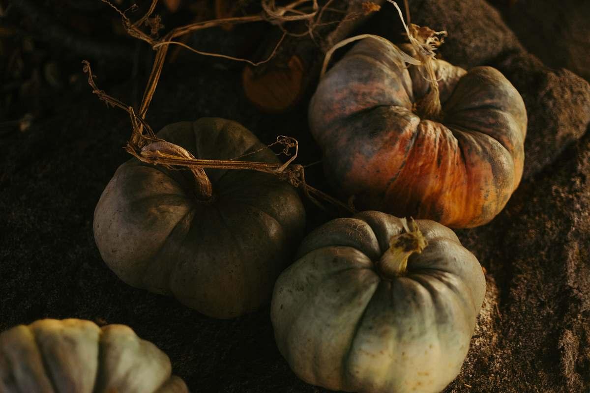 stock photos free  of flora pumpkin plants on soil food