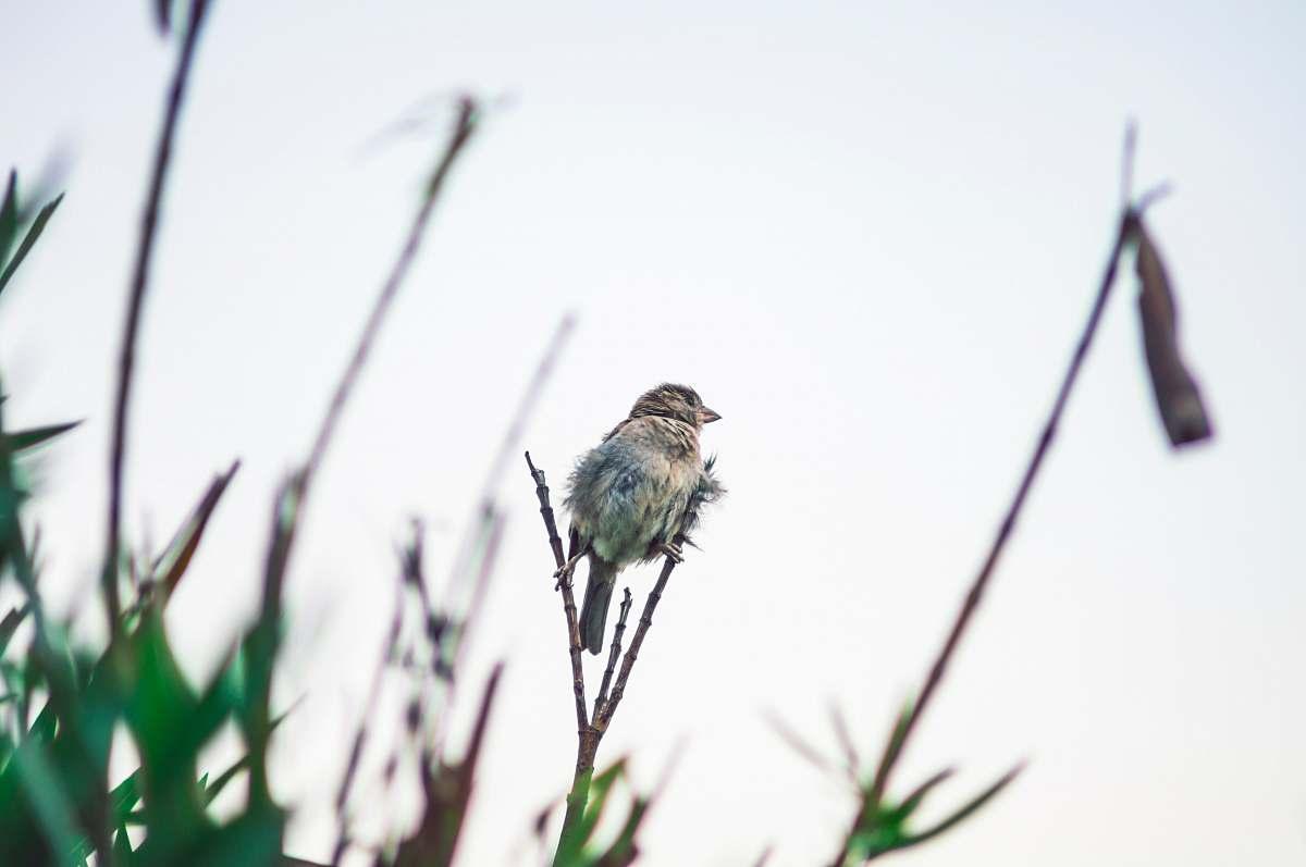 stock photos free  of bird bird on stem tree
