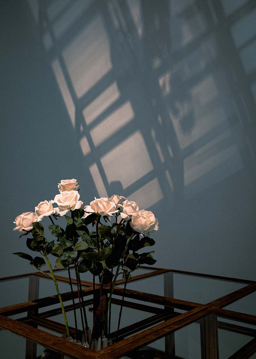 stock photos free  of handrail white rose flowers plant