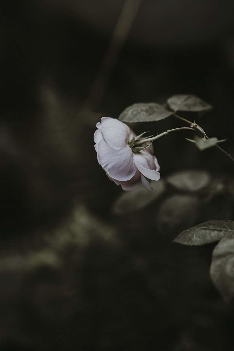 stock photos free  of blossom  grey