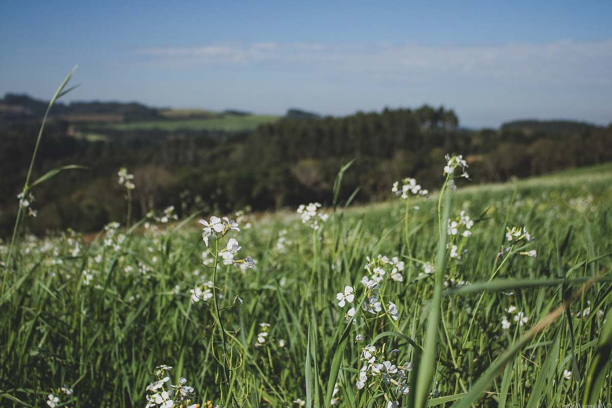 stock photos free  of blossom white flower field during daytime plant