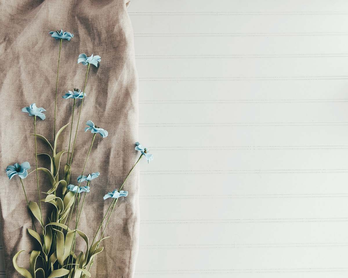 stock photos free  of flower blue flowers background