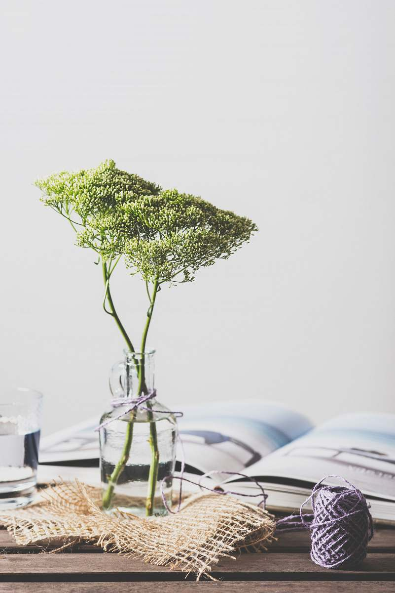 stock photos free  of flower green leafed plant on glass vase interior