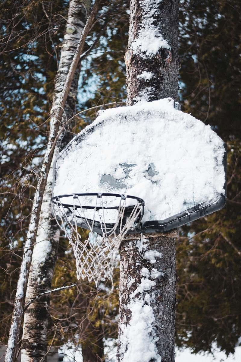 stock photos free  of hoop white basketball board tree