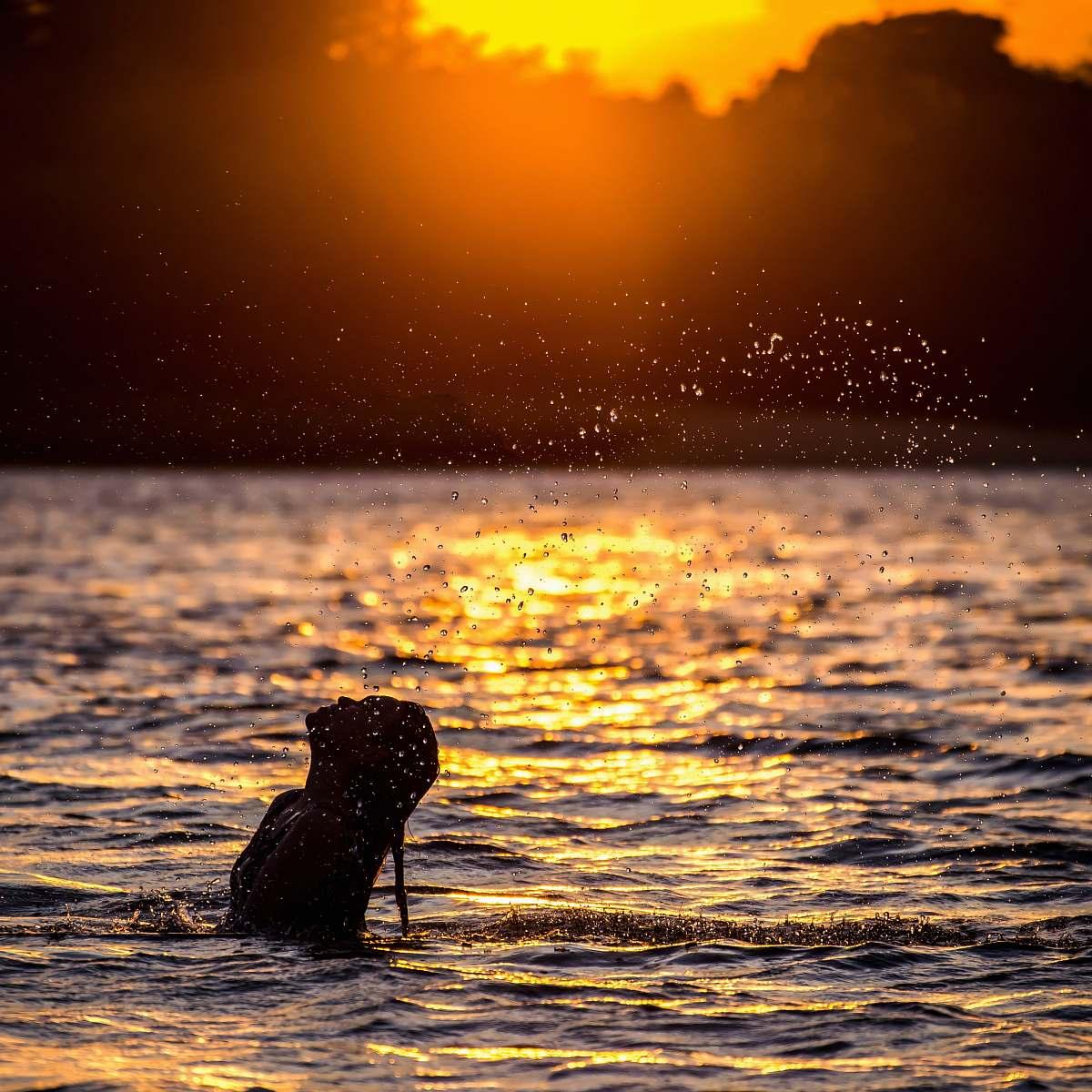 stock photos free  of splash woman in body of water near trees during sunset magic island resort