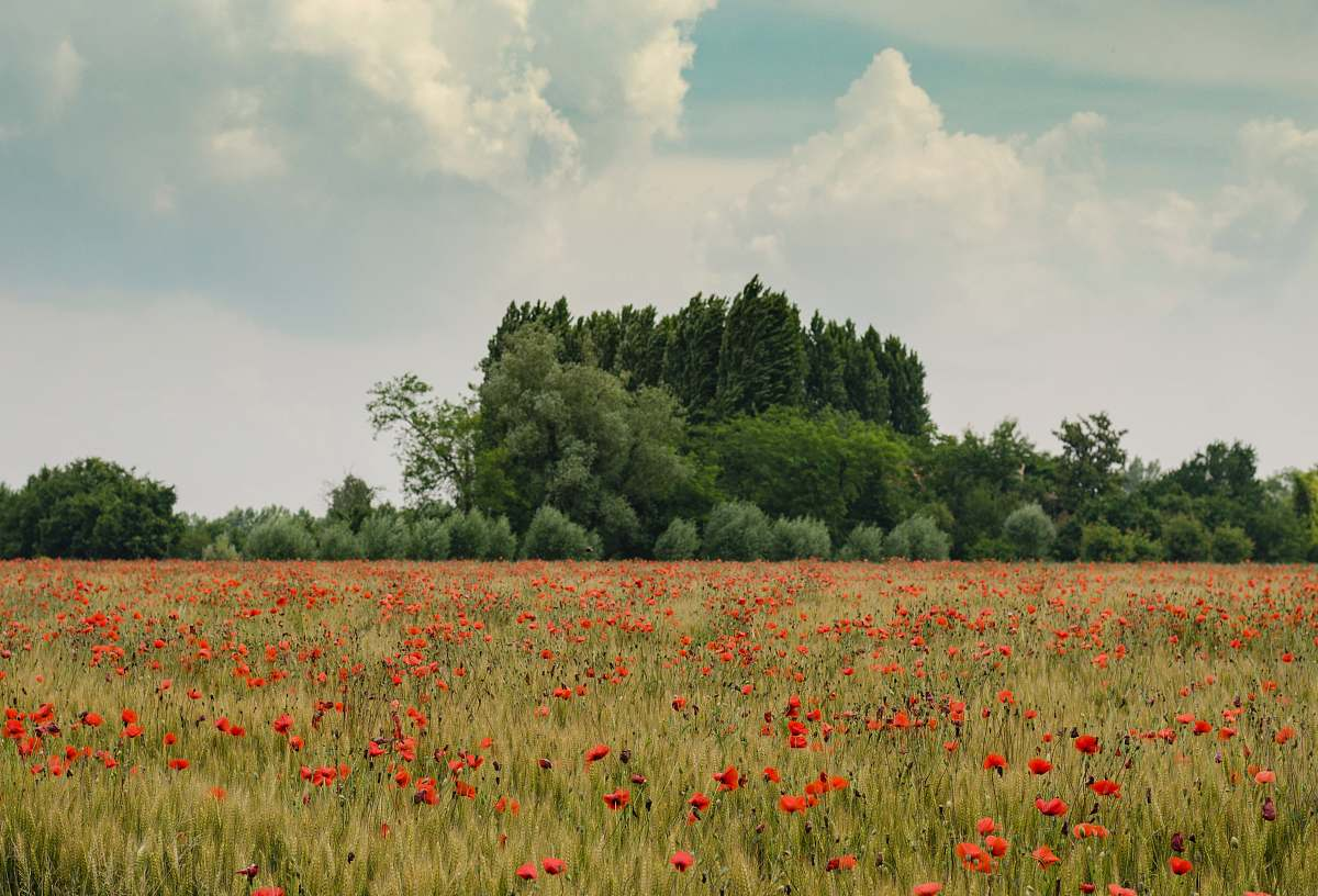 stock photos free  of flowers orange petaled flowers near green trees at daytime landscape