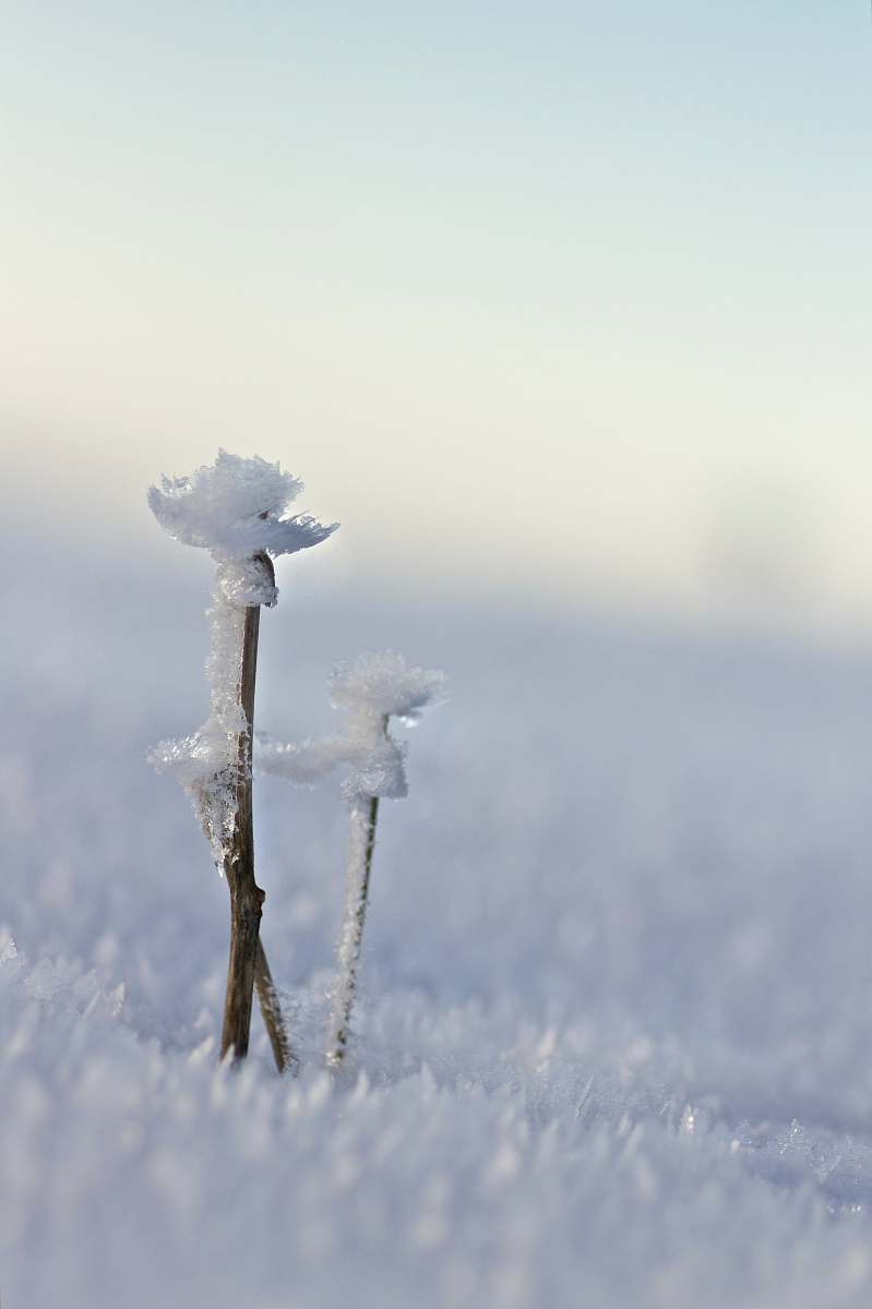 stock photos free  of nature brown icy branch outdoors