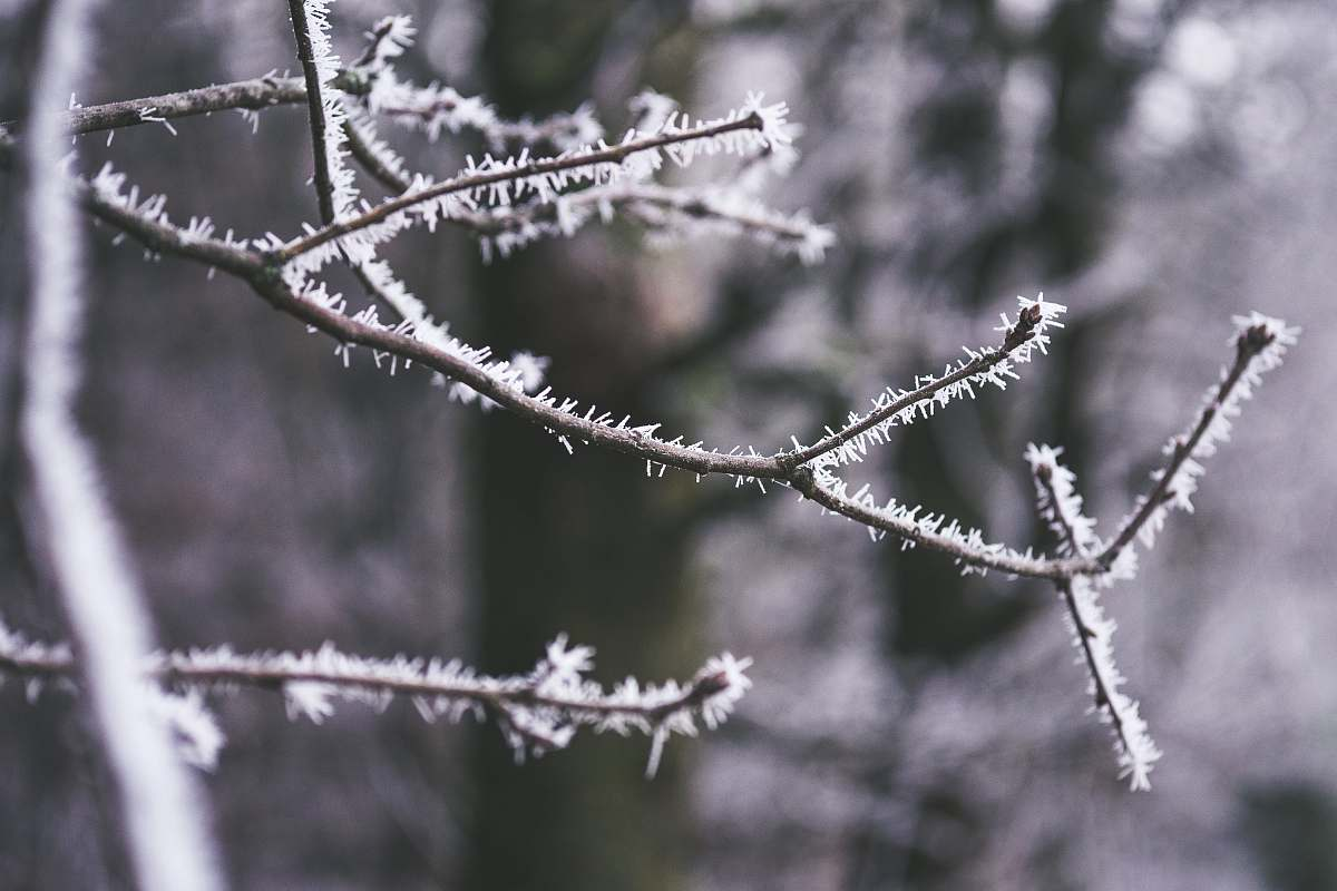 stock photos free  of nature tree covered with snow selective focus photography outdoors