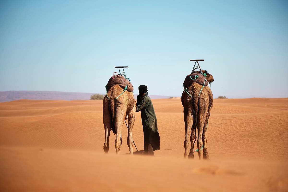 stock photos free  of desert person walking with two camels on desert during daytime nature