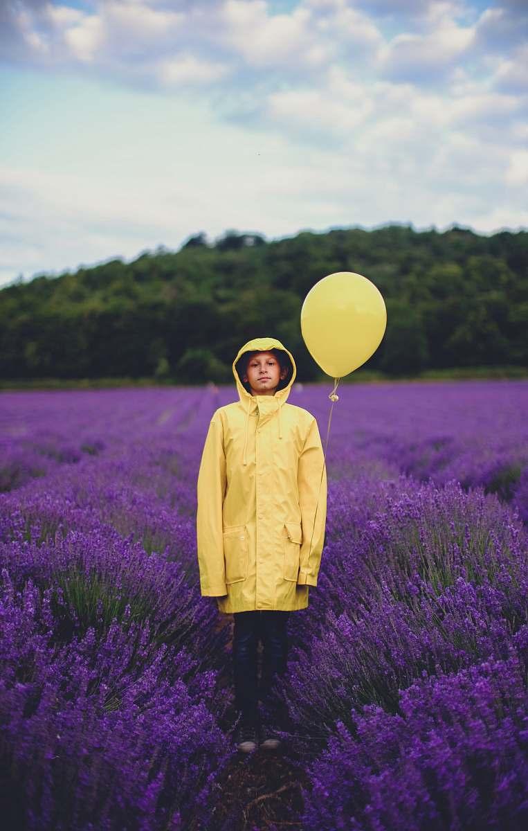 stock photos free  of plant woman in yellow dress shirt near purple flower field lavender