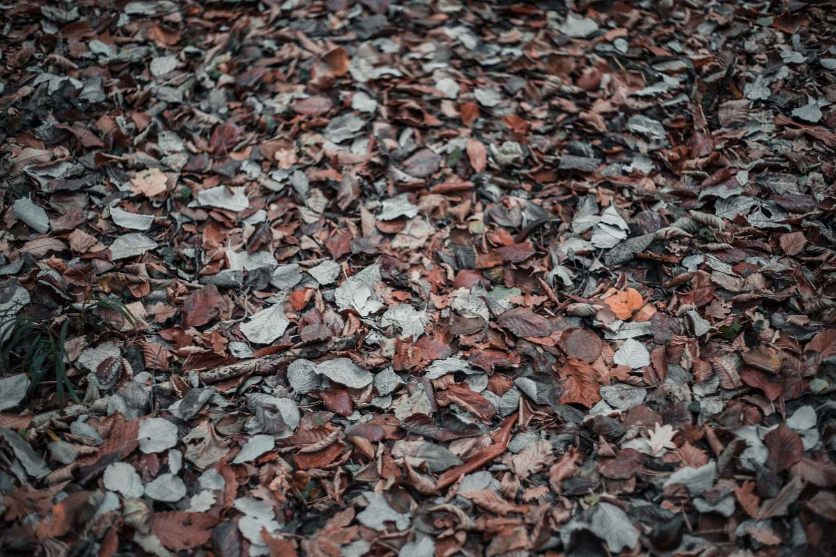 stock photos free  of leaf dried leaves plant