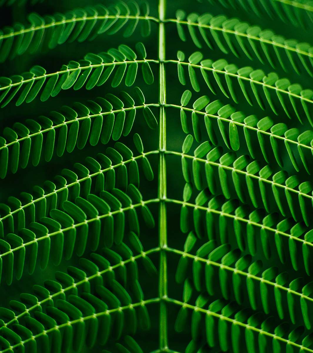 stock photos free  of green macro photography of green leafed plant plant