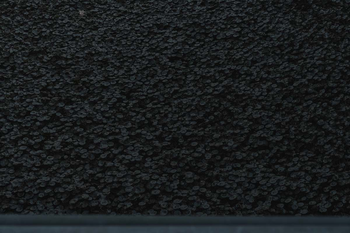 stock photos free  of texture  black