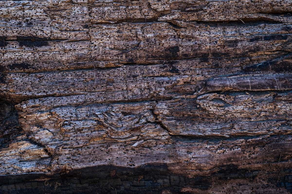 stock photos free  of wood brown tree bark rock