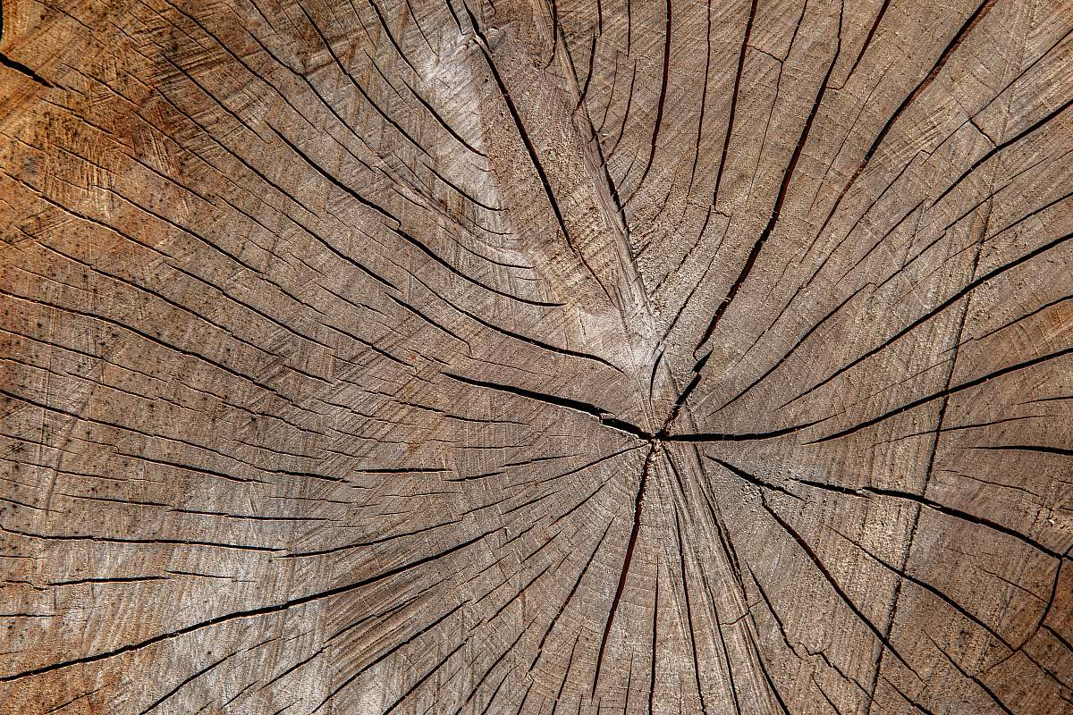 stock photos free  of plant brown wooden surface close-up photography wood