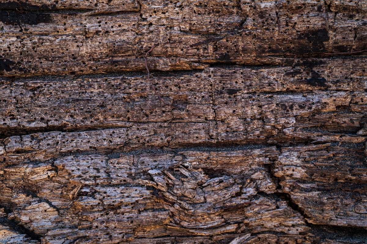 stock photos free  of rock brown wooden board plant