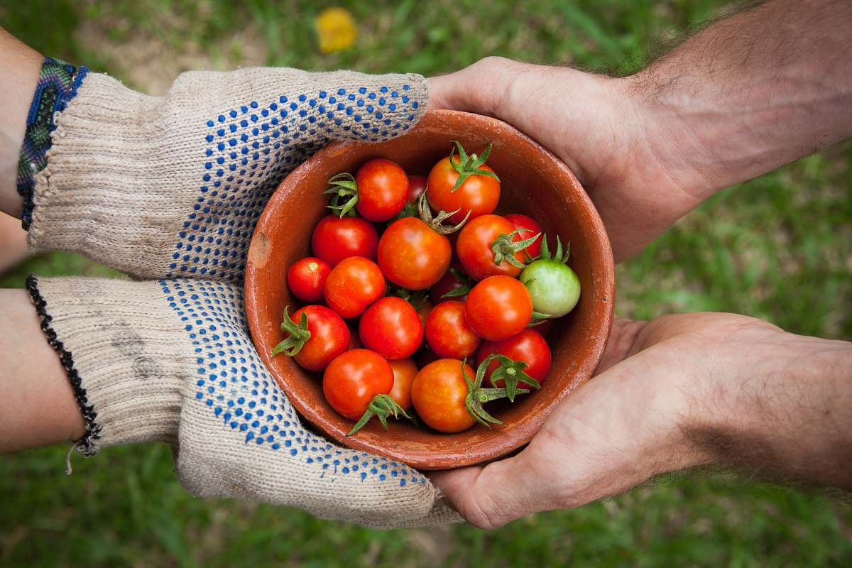stock photos free  of vegetable bowl of tomatoes served on person hand tomato