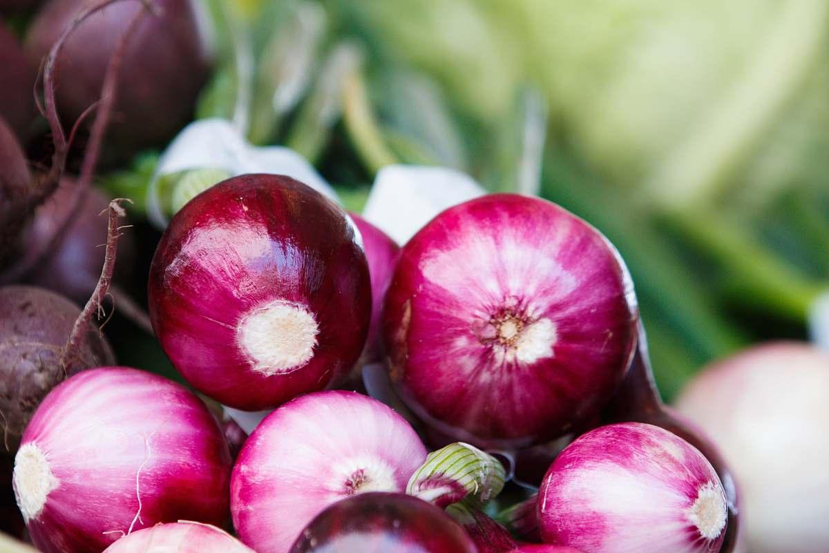 stock photos free  of vegetable onion lot torvehallerne