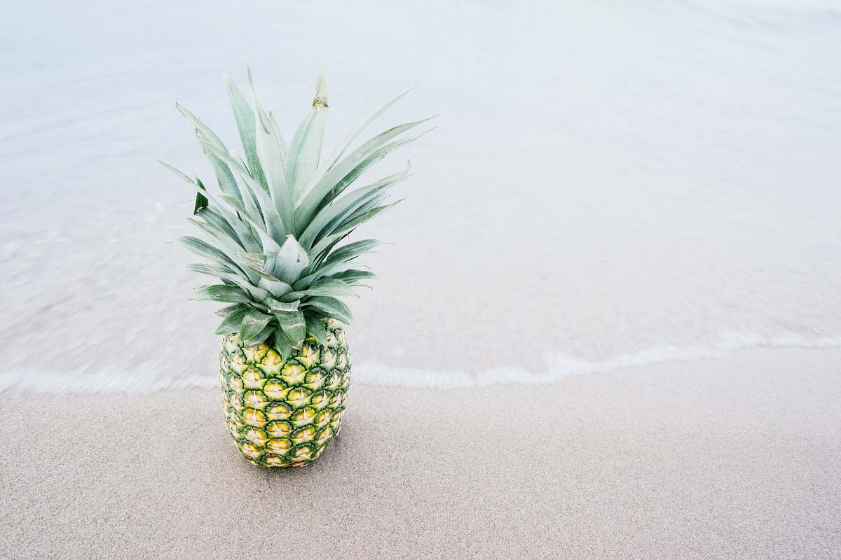 stock photos free  of food photography of pineapple fruit beside seashore during daytime pineapple