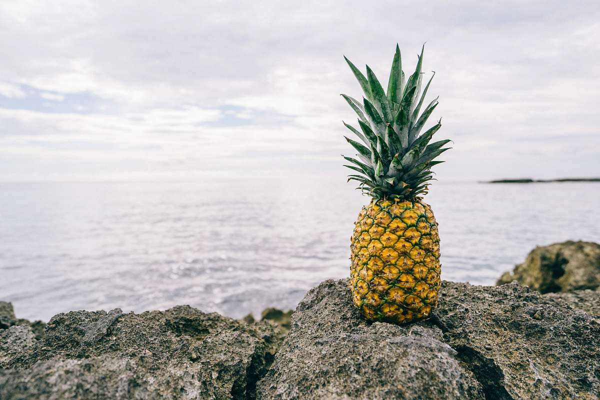 stock photos free  of food pineapple on gray rock near body of water pineapple