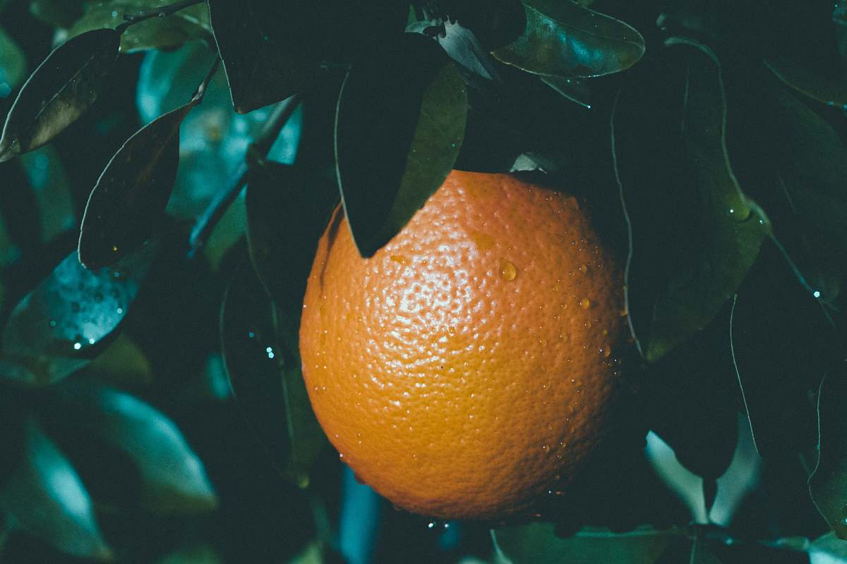 stock photos free  of food selective focus photography of round orange fruit citrus fruit