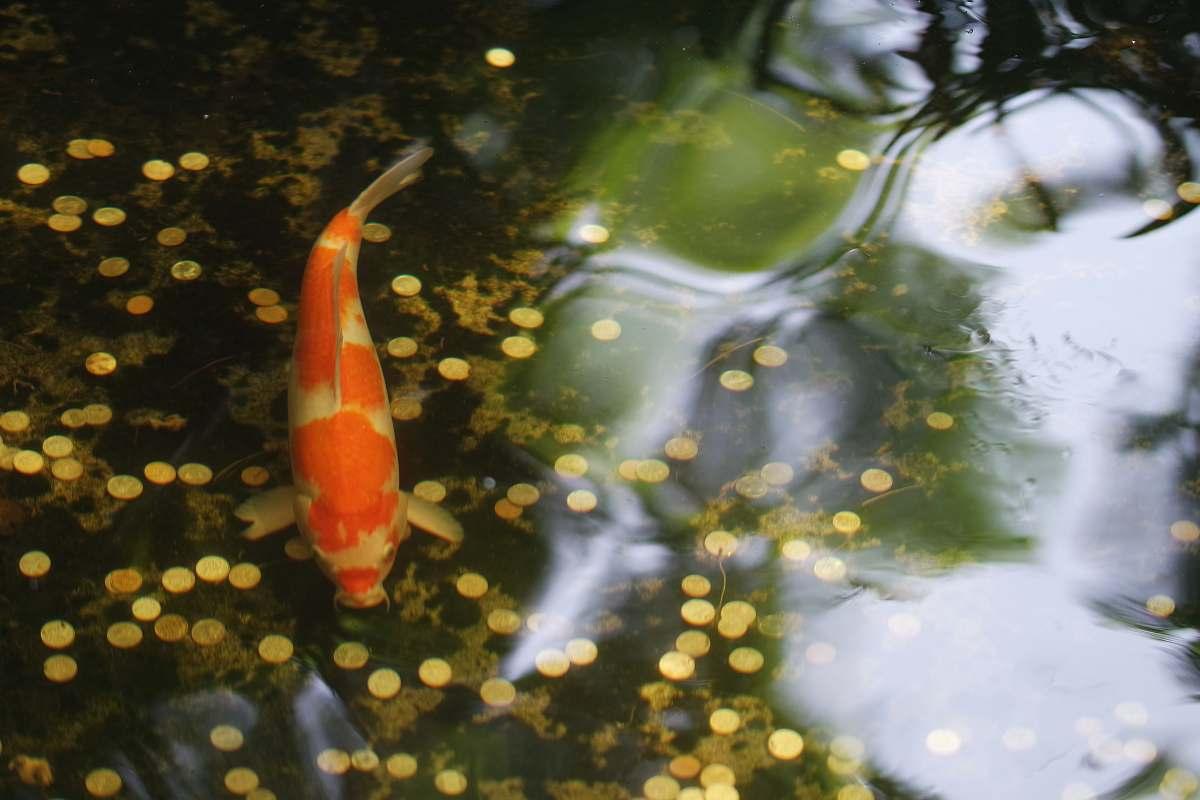 stock photos free  of fish  aquatic