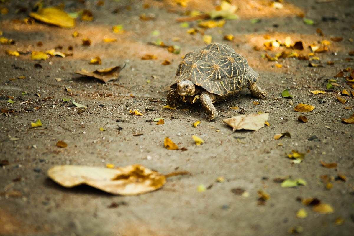 stock photos free  of reptile brown turtle on ground turtle