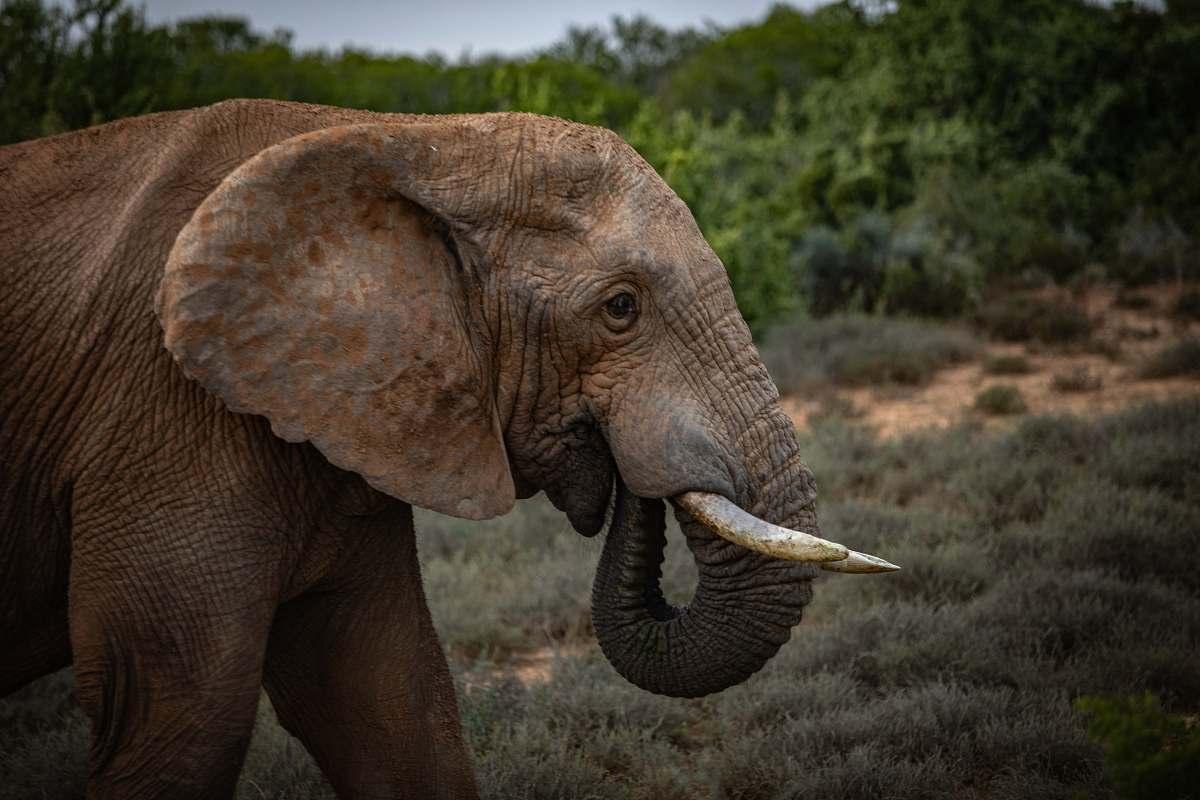 stock photos free  of mammal close-up of elephant near tree elephant