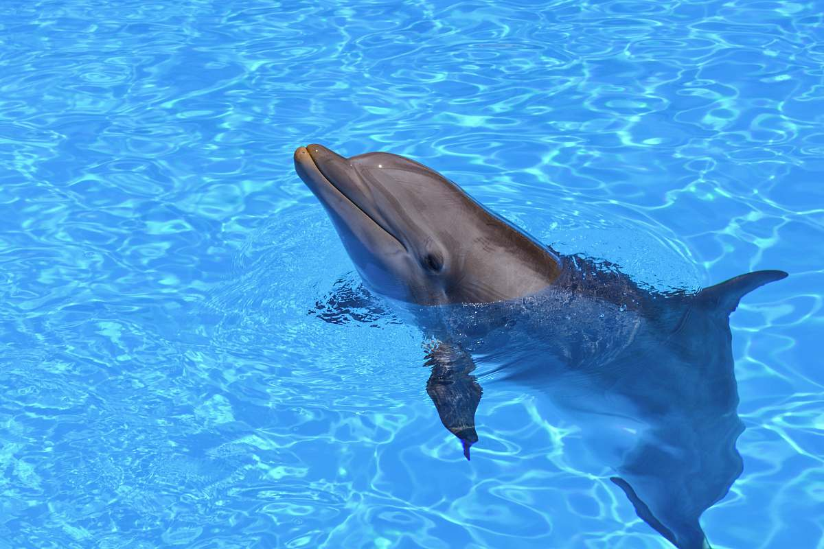 stock photos free  of dolphin dolphin with head sticking out of water during daytime sea life