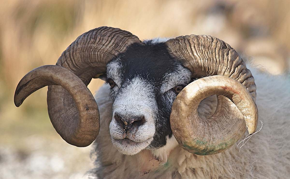 Horns Stock Photo - Download Image Now - iStock