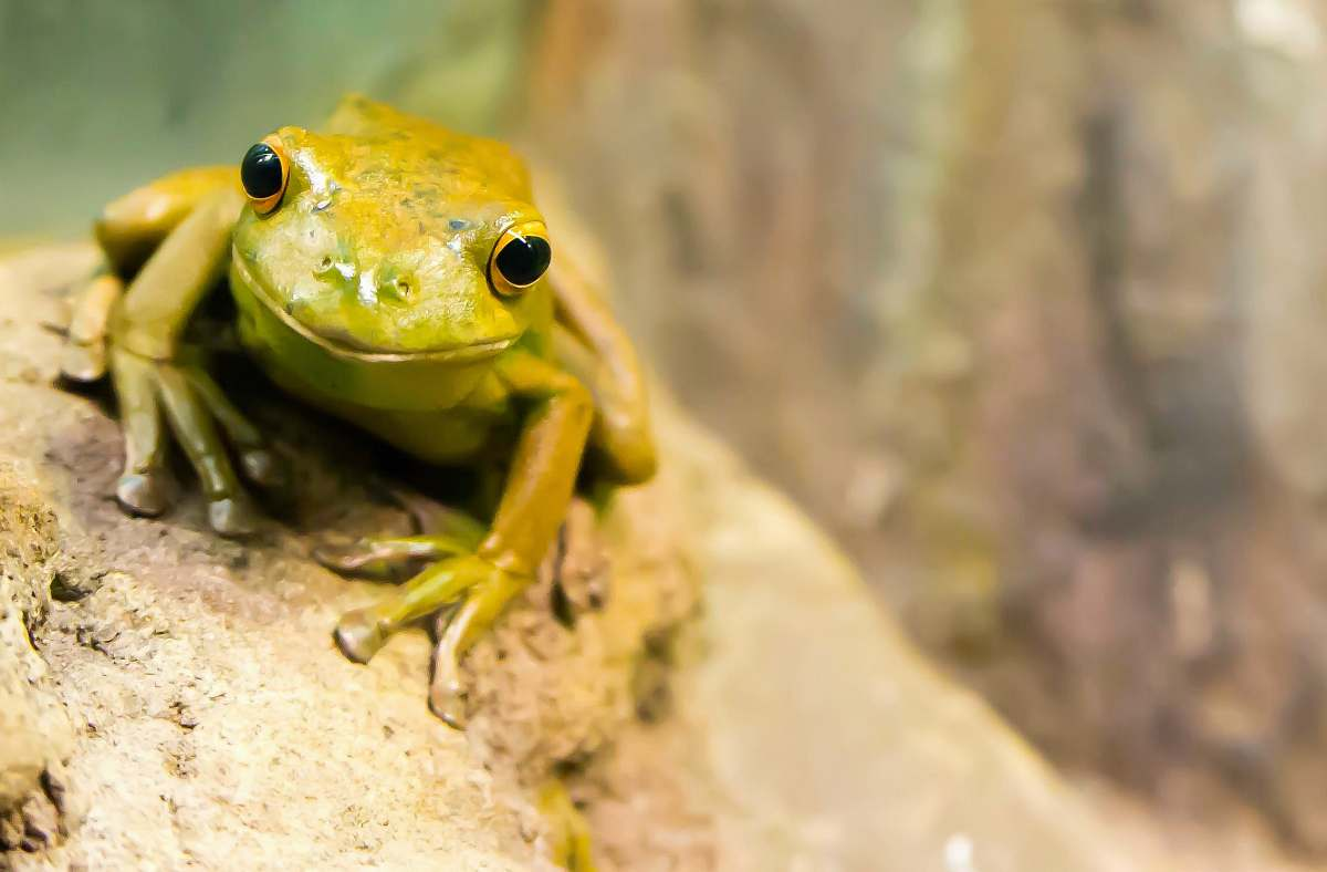 stock photos free  of frog selective focus photography of green frog amphibian