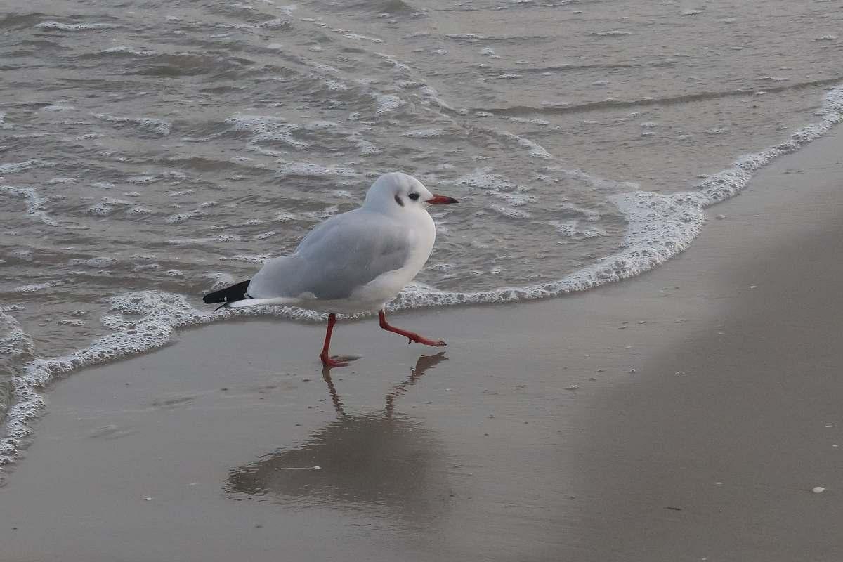 stock photos free  of bird white bird on beach grey