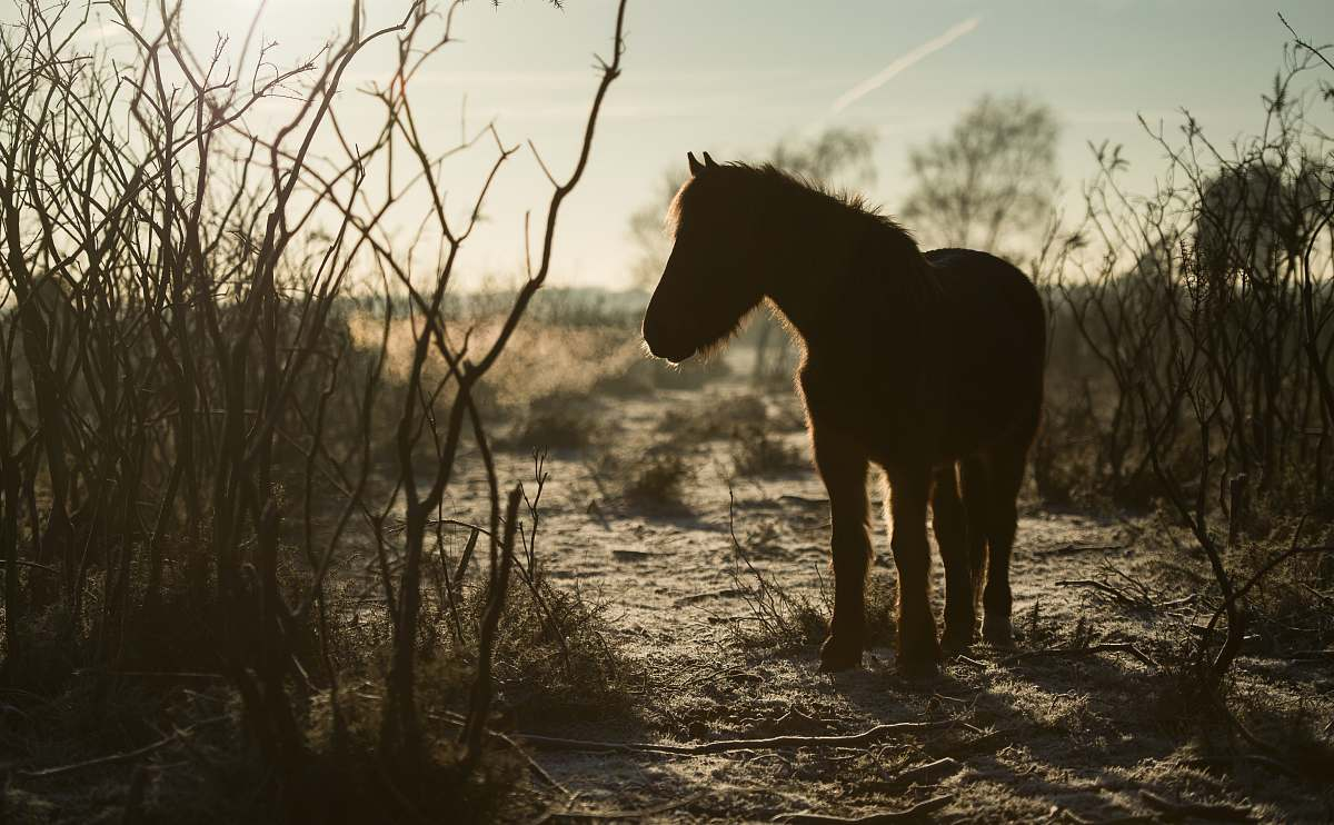 stock photos free  of horse silhouette of horse mammal