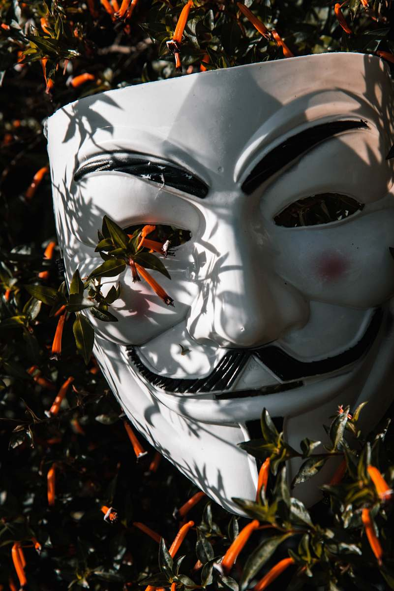 stock photos free  of helmet Guy Fawkes mask on plant apparel