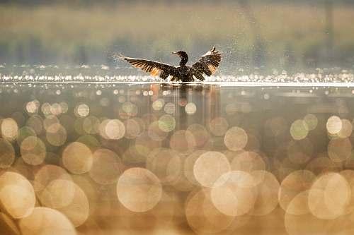 bird bird bathing on body of water maurice river