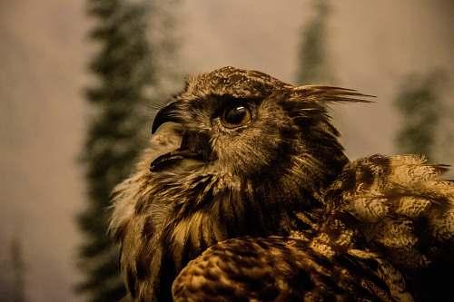 hawk brown bird bird