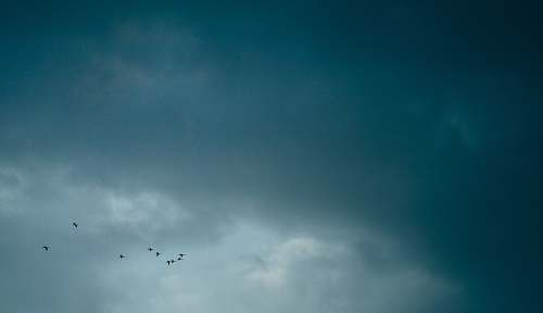 bird flock of bird flying during daytime flying
