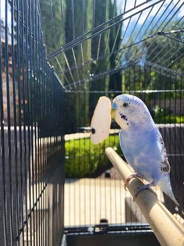 bird white and yellow bird on brown wooden stick parakeet