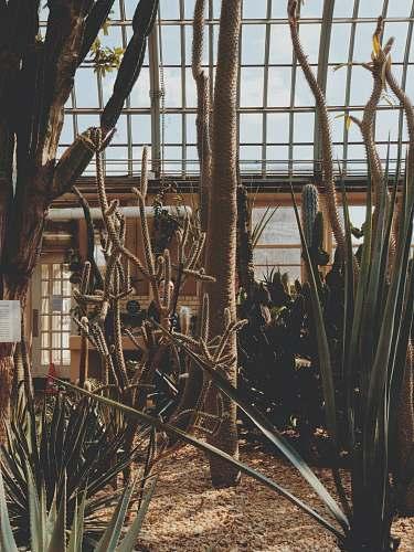 building indoor plants 344 n hamlin ave