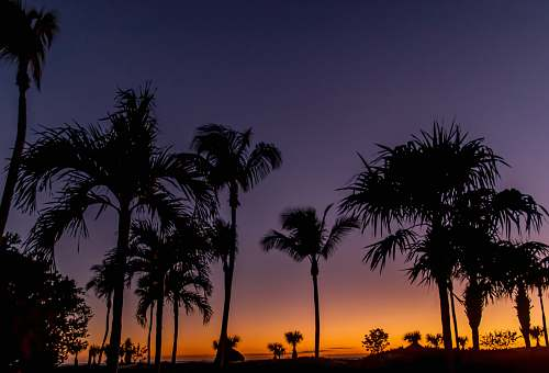 flora silhouette of trees during nighttime palm tree
