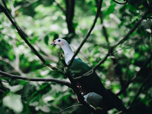 animal green and white bird perching on tree branch during daytime dove