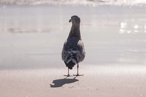 seagull grey and white bird standing in front of grey calm body of water during daytime grey