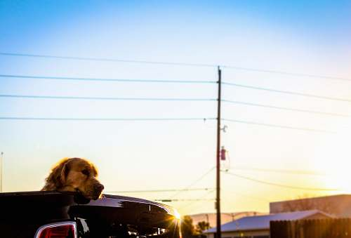 vehicle dog on vehicle grand junction