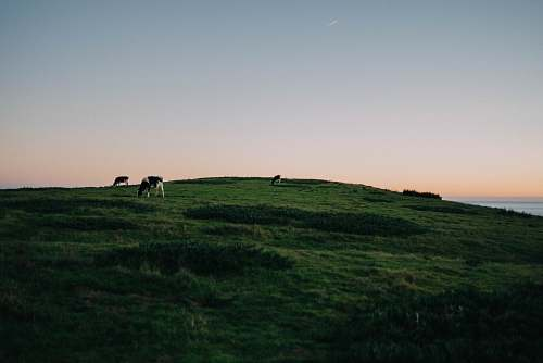 grassland landscape photography of hill outdoors